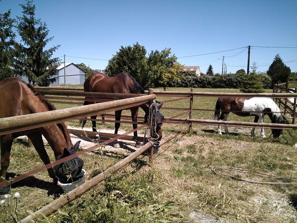 chevaux-ecurie-lpc